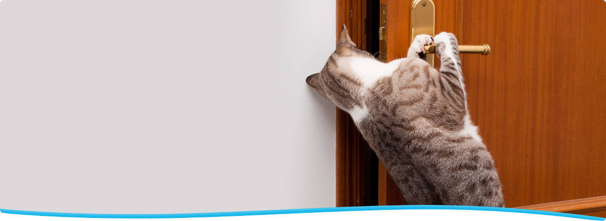 Cat-proofing your home