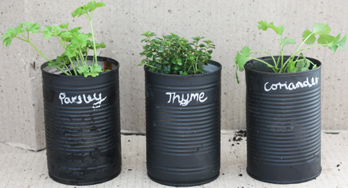 DIY HERB PROJECT PLANT