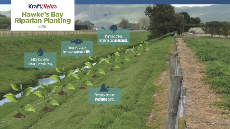 Hawke's Bay Riparian Planting 2019
