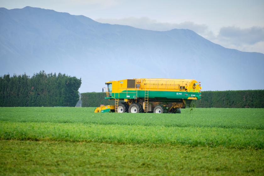 Pea Harvesting Image