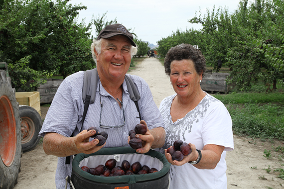 NZ Grown Black Doris Plums