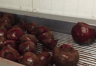 Wattie's Quality Hawke's Bay Beetroot