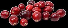 Cranberry-Maple BBQ Sauce