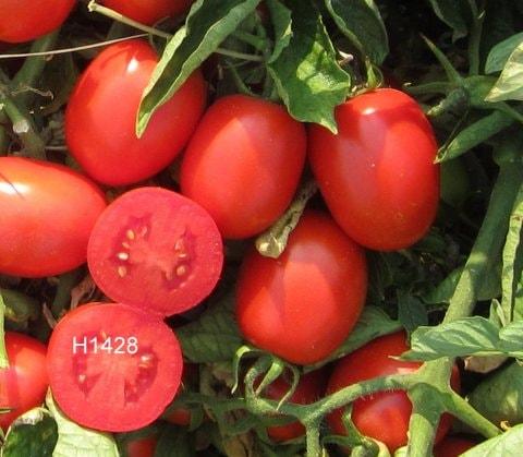 H1428 EFS