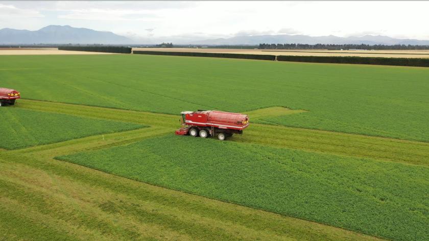 Wattie's 2020 Pea Harvest